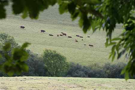 The Cattle who are Fed