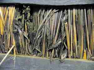 close up of smoke blackened thatch showing corn ear